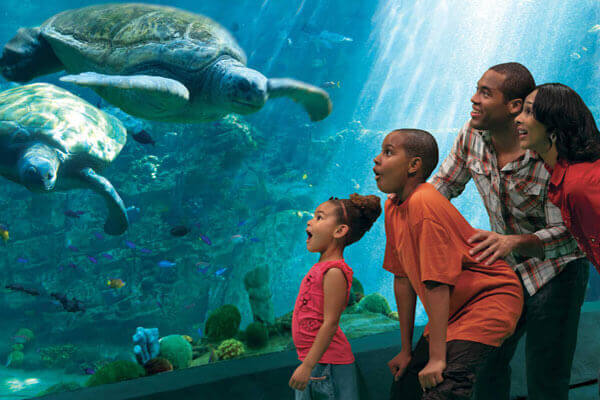 SeaWorld Orlando Single Day