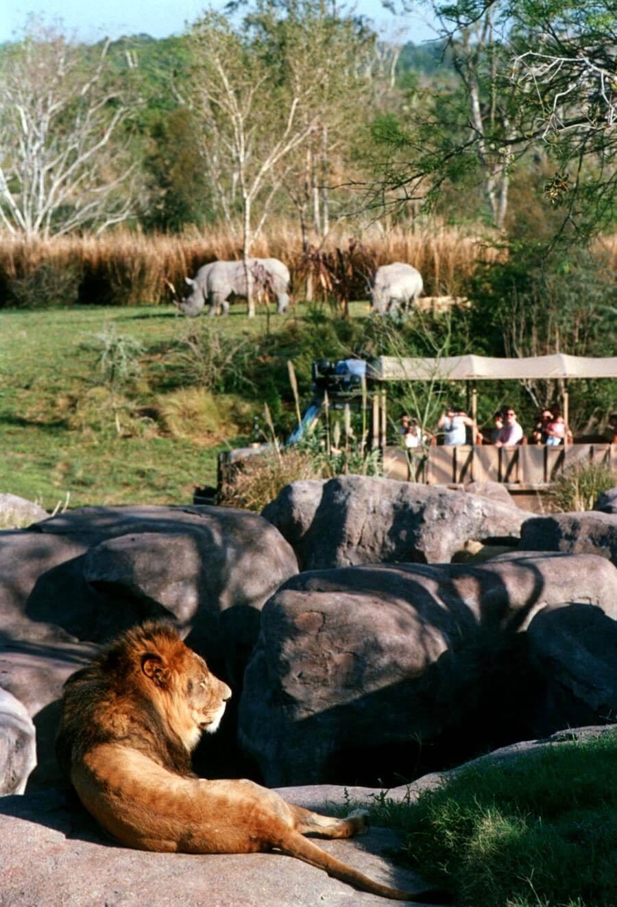 Disney Kilimanjaro Safaris
