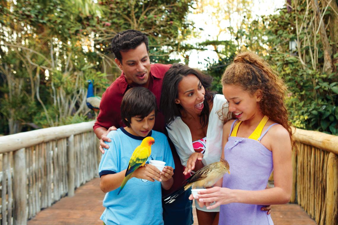 Discovery cove utlimate day resort with dolphin swim - Busch gardens tampa customer service ...